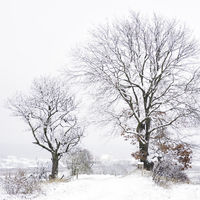 Trees on the way to oggau in burgenland in winter