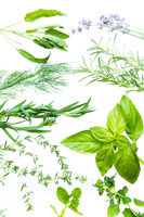 Assortment of fresh aromatic herbs on white background