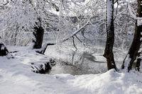 Winter Lake Below the Snow-clad Trees