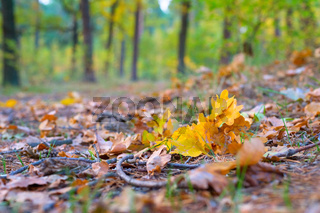 Fall leaves ground forest autumn