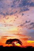 sunrise at Etosha National park, Namibia