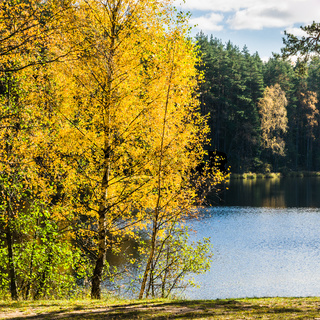 Beautiful autumn landscape with forest Lake