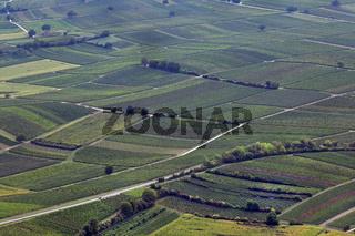 Weinberge in der Südpfalz