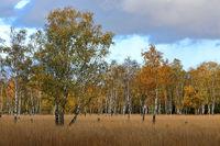 Autumn in Duvenstedter Brook