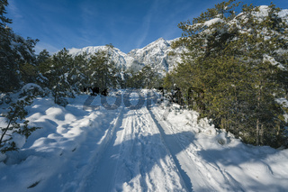 Winter walking path through snow between evergreen forest in Austrian Alps at Mieming, Tyrol, Austria