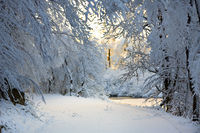 Knee-deep Snow on the Road