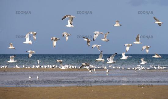 seagulls flying along the beach