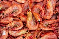 Lot of boiled-frozen wild shrimp with caviar cooked in sea water