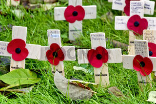 Poppy Remembrance Crosses at the church of St Lawrence, Warminster