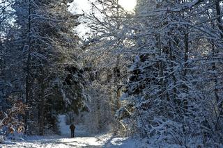 Wandern im Winterwald auf der Schwäbischen Alb