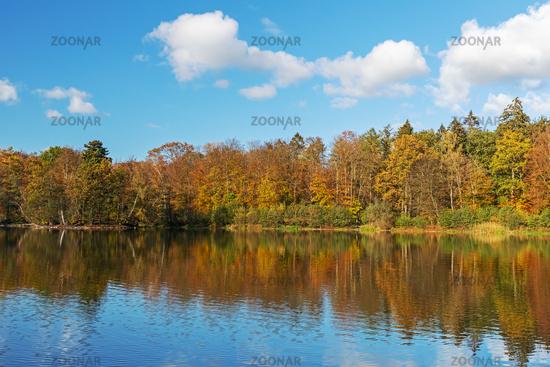 Wald mit Eichen und Buchen im Herbstlaub