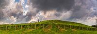 Vineyard panorama on an Austrian countryside, Styrian Tuscany
