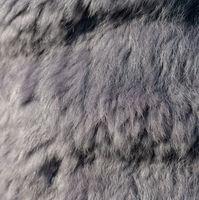 luxury purple gray rabbit fur as a background