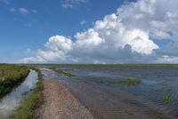 Aufkommende Flut in den Salzwiesen bei Fedderwardersiel    Coming tide in the salt marshes by Fedderwardersiel