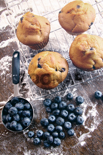 Blueberry muffins on baking rack