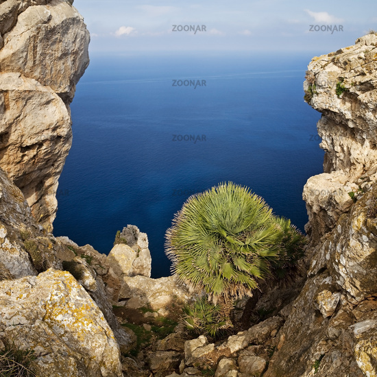 peninsula Cap Formentor, vista from Mirador Es Colomer, Majorca, Balearic Islands, Spain, Europe