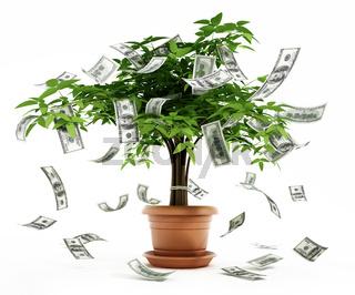 Money tree in the pot
