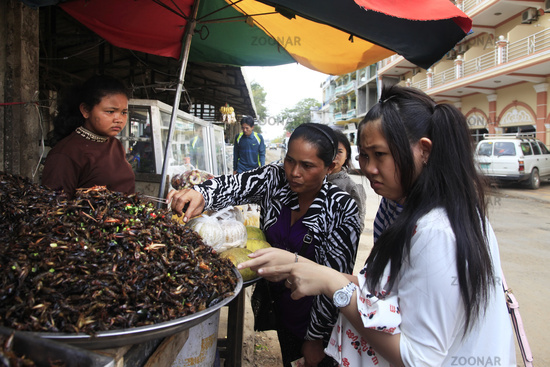 selling fried insects at market in Seam Peap