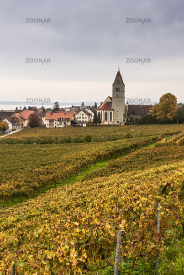 View of the wine village of Hagnau on Lake Constance with church and vineyard in autumn, Baden-Wuert