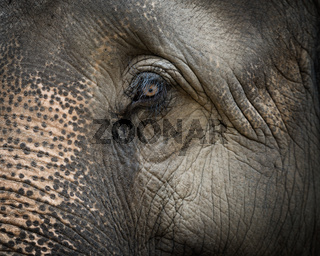 Closeup on elephant face