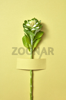 Green natural tropical plant attached to paper background.