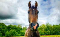 Horse under a stormy sky