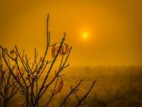 Foggy morning in the autumn hearth