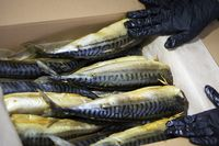 Smoked mackerel in a paper box. Fishing industry.
