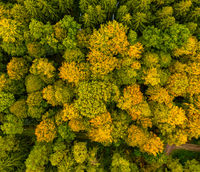 Colorful tree tops from above, autumn drone shot by a flight over a forest.
