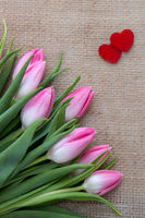 Pink tulips and red hearts isolated on a cloth background.