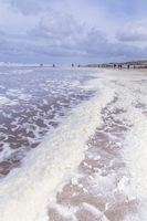 Foam algae along the beach