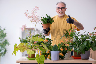Old male gardener with plants indoors