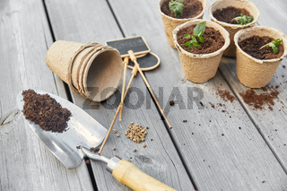seedlings in pots with soil on wooden background