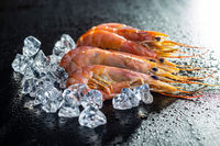Boiled tiger prawns with ice. Tasty shrimps.