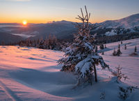 Picturesque winter alps sunrise. Highest ridge of the Ukrainian Carpathians is Chornohora with peaks of Hoverla and Petros mountains. View from Svydovets ridge and Dragobrat ski resort.