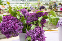 Beautiful bouquet of lilac