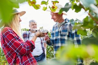 Gruppe Weinbauern trinkt gemeinsam Rotwein