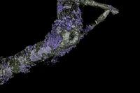 Lichen in ultraviolet