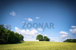 Rural fields in a countryside landscape