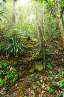 rainforest in Masoala national park, Madagascar