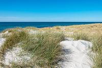 Landschaft in den Dünen an der Ostseeküste bei Ahrenshoop auf dem Fischland-Darß