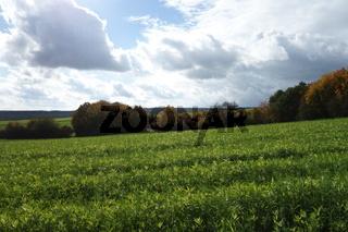 20201024_Gründüngung, green manure003.jpg