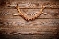 Deer antlers on vintage wooden background