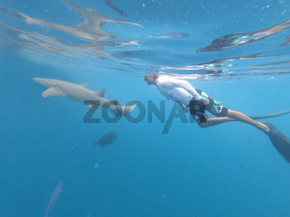 Male free diver and nurse shurk, Ginglymostoma cirratum, hovering underwater in blue ocean.