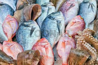 Frischer Fisch und Tintenfisch