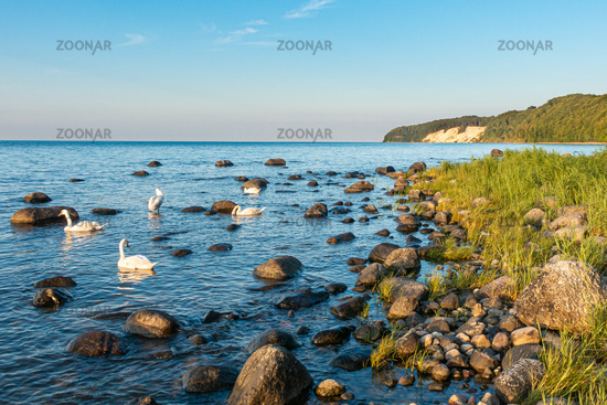Wild natural beach in Binz on Rügen, Mecklenburg-Vorpommen, summer 2020