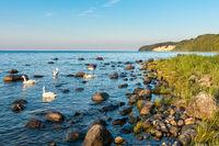 Wilder Naturstrand in Binz auf Rügen, Mecklenburg-Vorpommen, Sommer 2020
