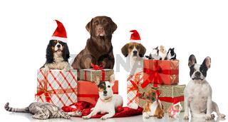 Tierweihnacht