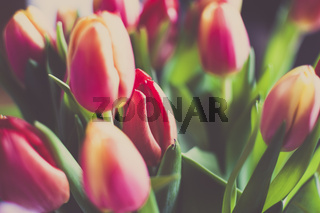 Bright Tulip time