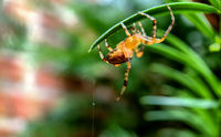 Macro photo of a spider hunting at its web
